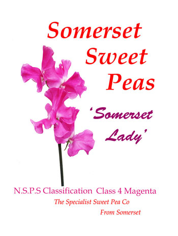 """Somerset Lady"""