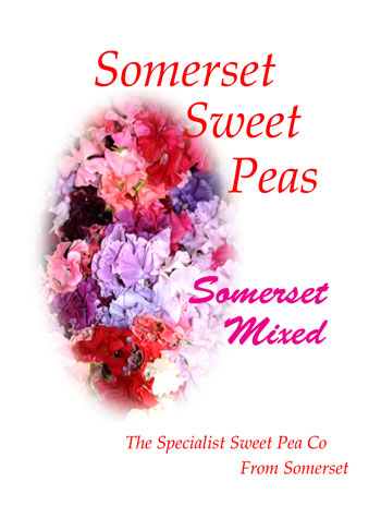 Somerset Mixed Spencers